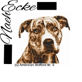 American Staffordshire Terrier 6