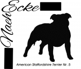 American Staffordshire Terrier 5