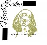 Amerikanischer Cockerspaniel 1