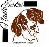 Braque de l'Ariège