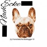 Französische Bulldogge 13