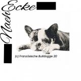 Französische Bulldogge 20
