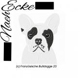 Französische Bulldogge 23
