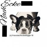 Französische Bulldogge 18