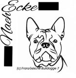 Französische Bulldogge 7