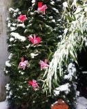 Stickdatei Vogel 5  blommor fagel 10x10
